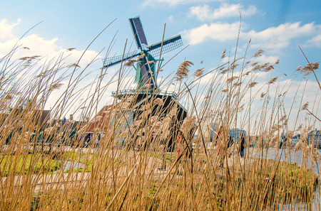 Dutch windmills in dry grass and wind.