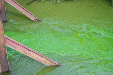 Contaminated by microorganisms water flow in the summe. Stock Photo