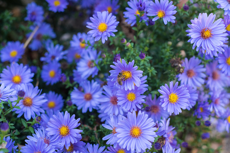 Many violet autumn flowers on one image Stock fotó