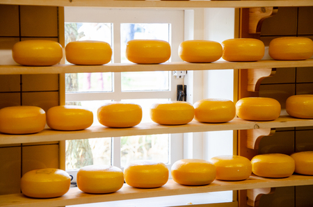 Production of classic Dutch cheese in Zachse Schans. Фото со стока