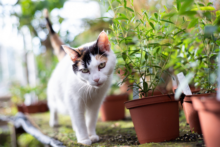 Cat in a large greenhouse at different flowers.