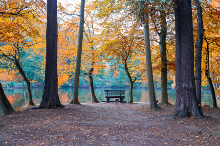 Bench on the shore of a pond in autumn.