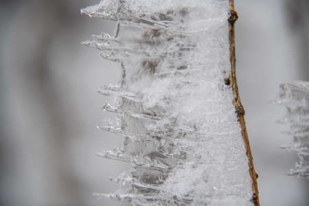 Ice icicles on a small tree. Imagens