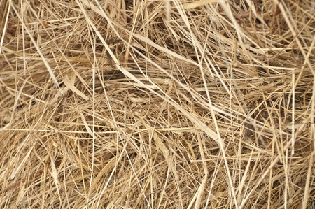 Background in the form of haystacks  photo