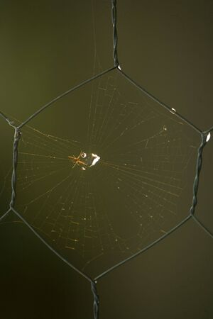 barbed wire fences: Barbed wire fences with spider Stock Photo
