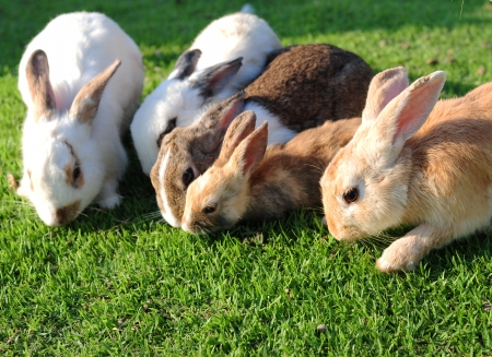 Lots of Rabbit in a green grass