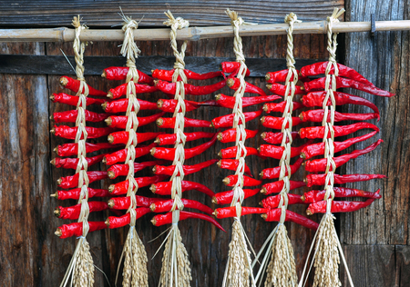 dried chili s hanging on a wall photo