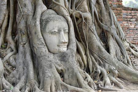 buddha head in the tree roots, Ayutthaya is old capital of Thailand photo
