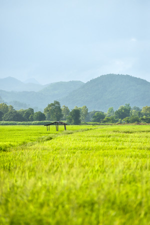 Cottage with rice in ?Thailand and mountain background Stock Photo