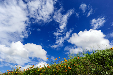 grassy knoll: The grassy knoll with blue sky for background