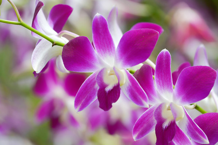 colorful orchid flower in farm  10 photo