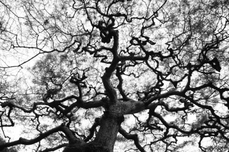 directly below: Branch of tree in Black and white