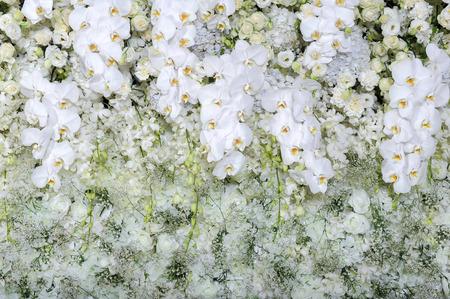 Witte rozen en witte orchideeën op witte rozen muur