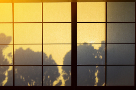 Tree shadow Behind the tradition paper japanese door Reklamní fotografie