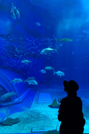 Silhouettes Woman in Aquarium