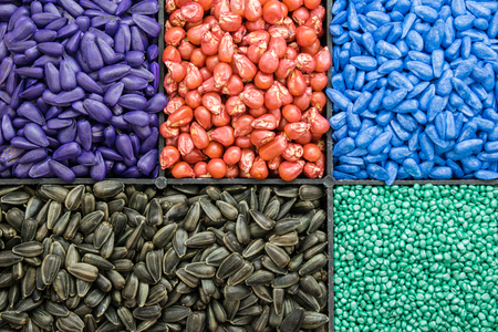seed sunflower seeds, corn, radishes. painted agro color for sorting and labeling Stok Fotoğraf