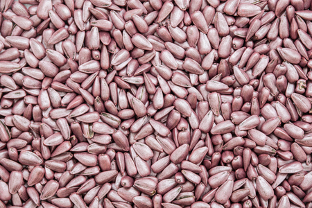 seed sunflower seeds. painted agro color for sorting and labeling
