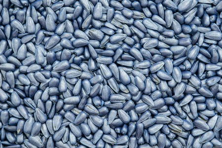 seed sunflower seeds. painted agro color for sorting and labeling.