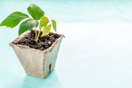 a plant in a peat pot on a turquoise background. Earth Day