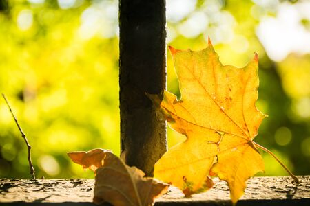 Yellow maple leaf on granite wall through which the sun shines. Autumn concept. copy space.