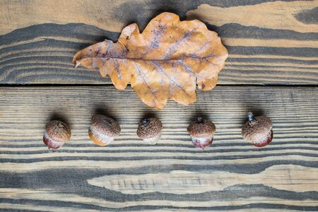 Flat lay acorns and oak leaf on wooden background. autumn concept. Top view
