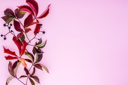 Autumn composition. red leaves with berries on a pink background. autumn background. flat lay, top view, copy space