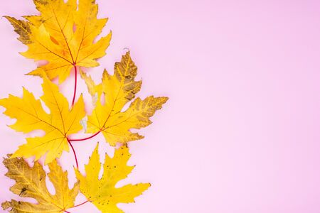 Autumn composition. yellow leaves with berries on a pink background. autumn background. flat lay, top view, copy space