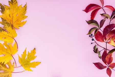 Autumn composition. yellow and red leaves with berries on a pink background. autumn background. flat lay, top view, copy space