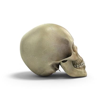 bleak: Human skull on isolated white background 3d render Stock Photo