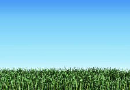 render: Grass 3d render on blue Stock Photo