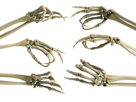 hand skelet toont vingers 3d render op wit Stockfoto