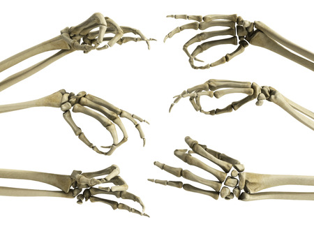 hand skeleton shows fingers 3d render on white