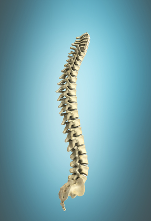 human spine 3d render on blue background