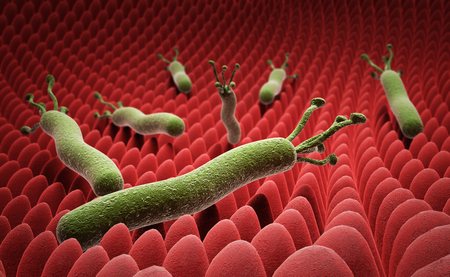 helicobacter pylori on the surface of the stomach 3d render on white