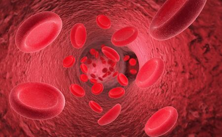 endothelial: Red blood cells erythrocytes in interior of arterial or capillary blood vessel Showing endothelial cells and blood flow or stream Human anatomy model 3D visualization Stock Photo