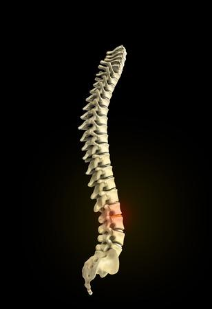 human spine 3d render on black background