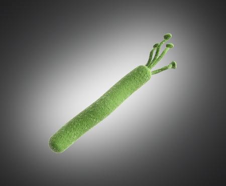 helicobacter pylori 3d render image on grey Stock Photo