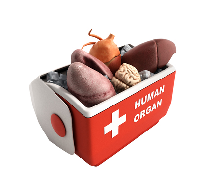 organ transportation concept open human organ refrigerator box red 3d render on white no shadow background