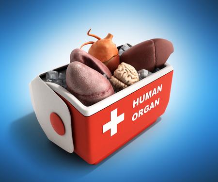 Concepto de transporte de órganos abrir caja de refrigerador de órgano humano 3d rojo render sobre fondo azul Foto de archivo - 78932404