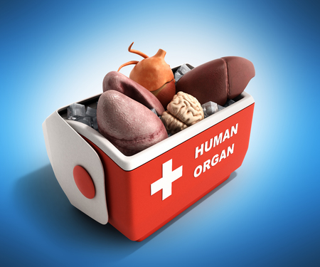 organ transportation concept open human organ refrigerator box red 3d render on blue background Stock Photo