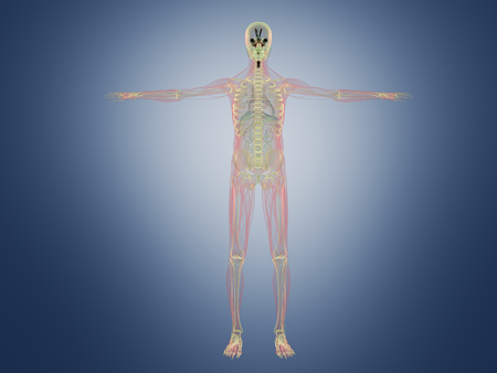 Human Anatomy x ray 3d render on blue