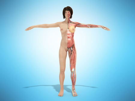 A female nude body anatomy for books 3d illustration on blue Stock Photo