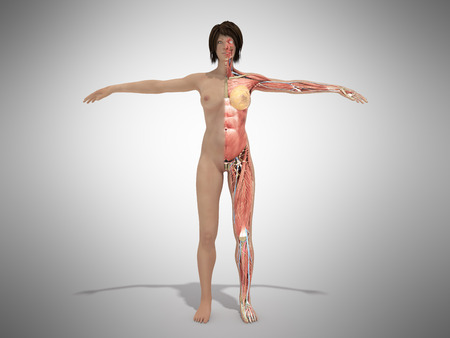 A female nude body anatomy for books 3d illustration on grey Stock Photo