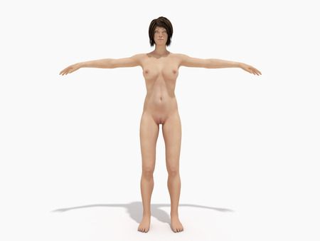 A woman body for books on anatomy 3d render on white