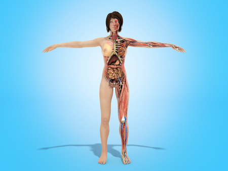 A woman body for books on anatomy 3d render image on blue