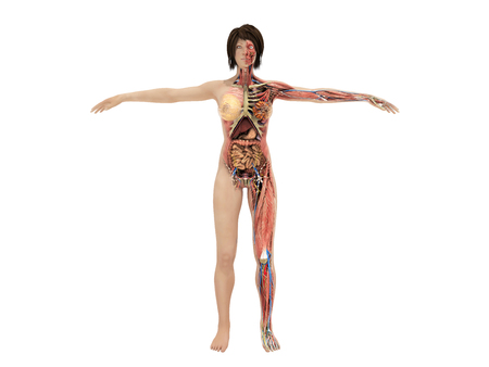 Een vrouwenlichaam voor boeken op 3d anatomie geeft beeld op wit terug geen schaduw Stockfoto