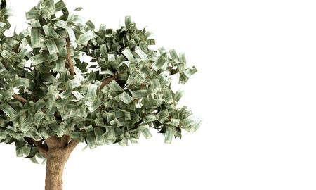 Dollar tree with hundred dollar bills on white