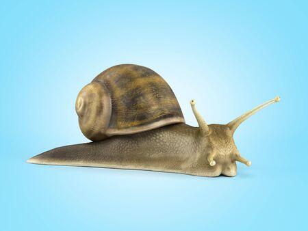 Gsrden snail 3d render on blue gradient Reklamní fotografie