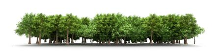 Green trees isolated on white background Forest and foliage in summer 3d render