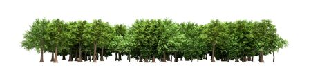 Green trees isolated on white background Forest and foliage in summer 3d render no shadow